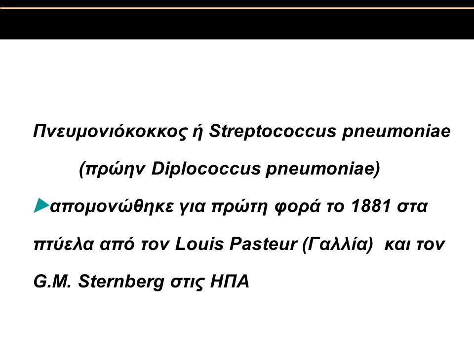Πνευμονιόκοκκος ή Streptococcus pneumoniae