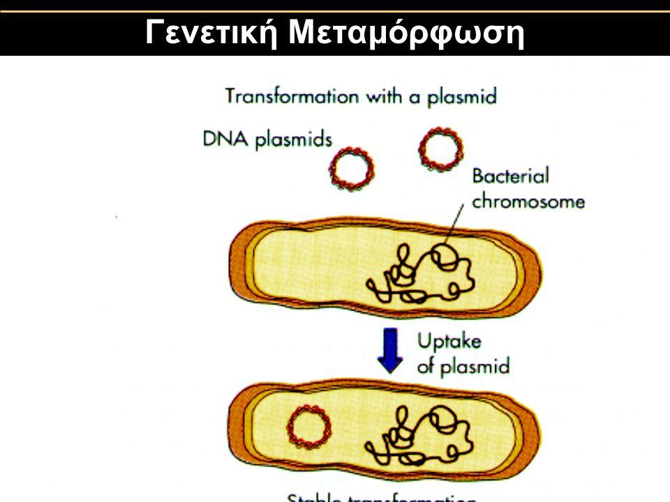 Γενετική Μεταμόρφωση