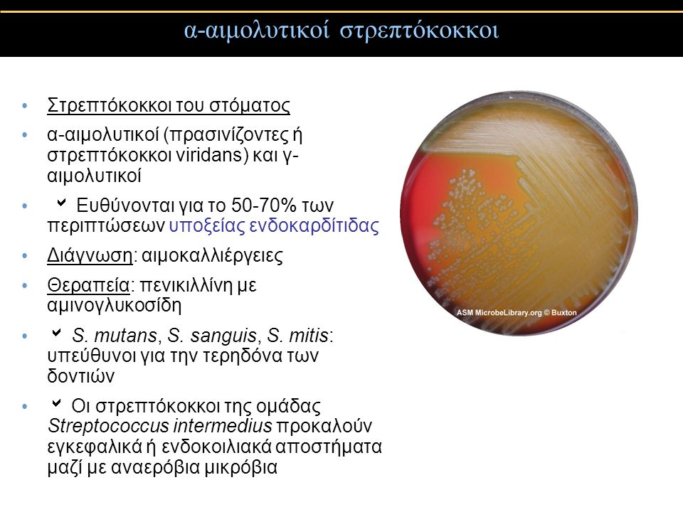 α-αιμολυτικοί στρεπτόκοκκοι