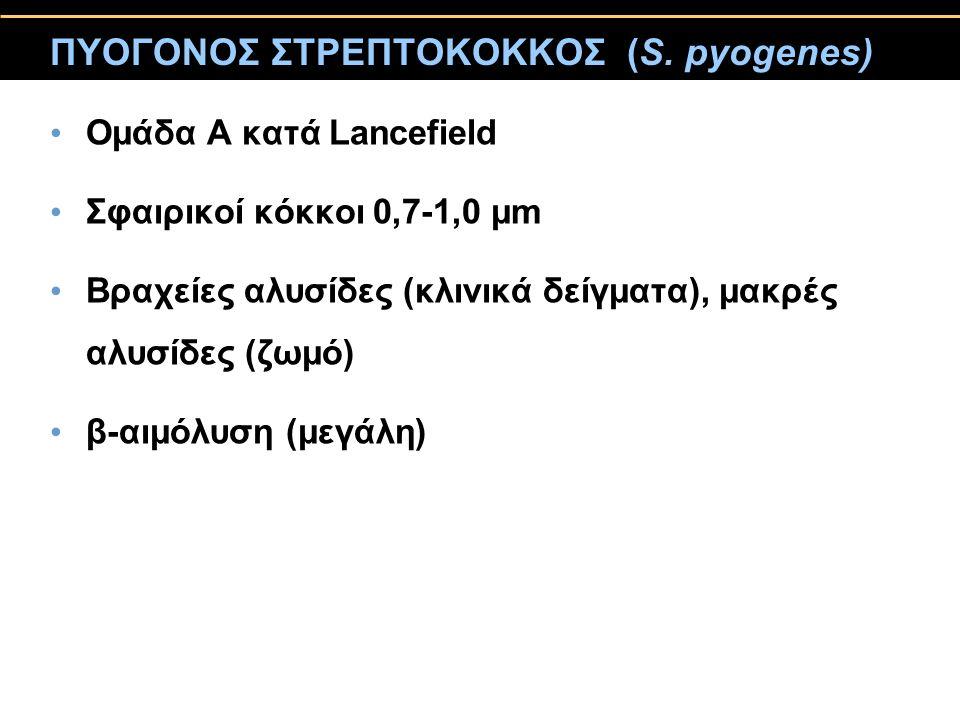 ΠΥΟΓΟΝΟΣ ΣΤΡΕΠΤΟΚΟΚΚΟΣ (S. pyogenes)