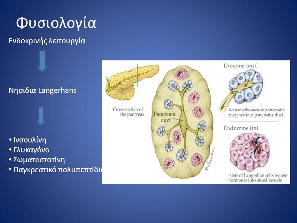 Φυσιολογία Ενδοκρινής λειτουργία Νησίδια Langerhans Ινσουλίνη