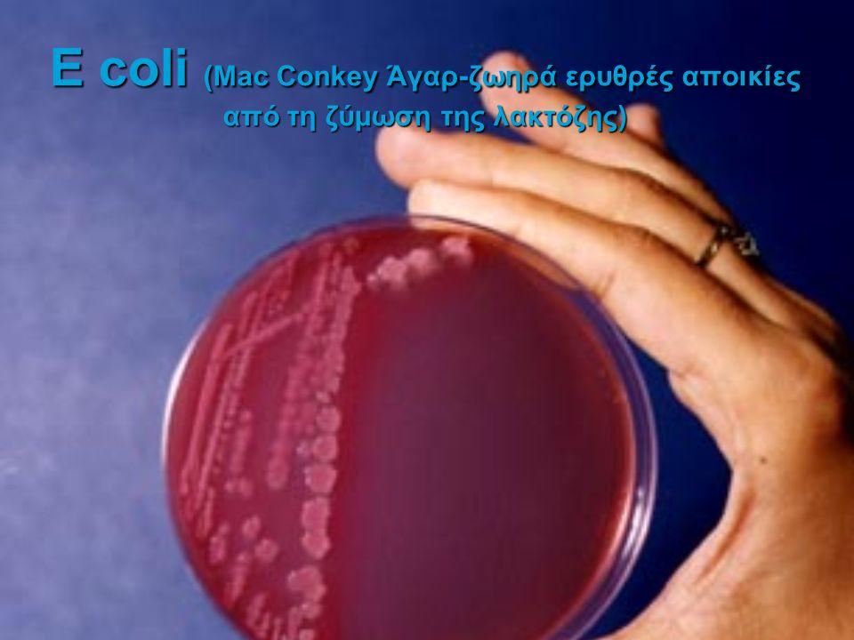 E coli (Mac Conkey Άγαρ-ζωηρά ερυθρές αποικίες από τη ζύμωση της λακτόζης)