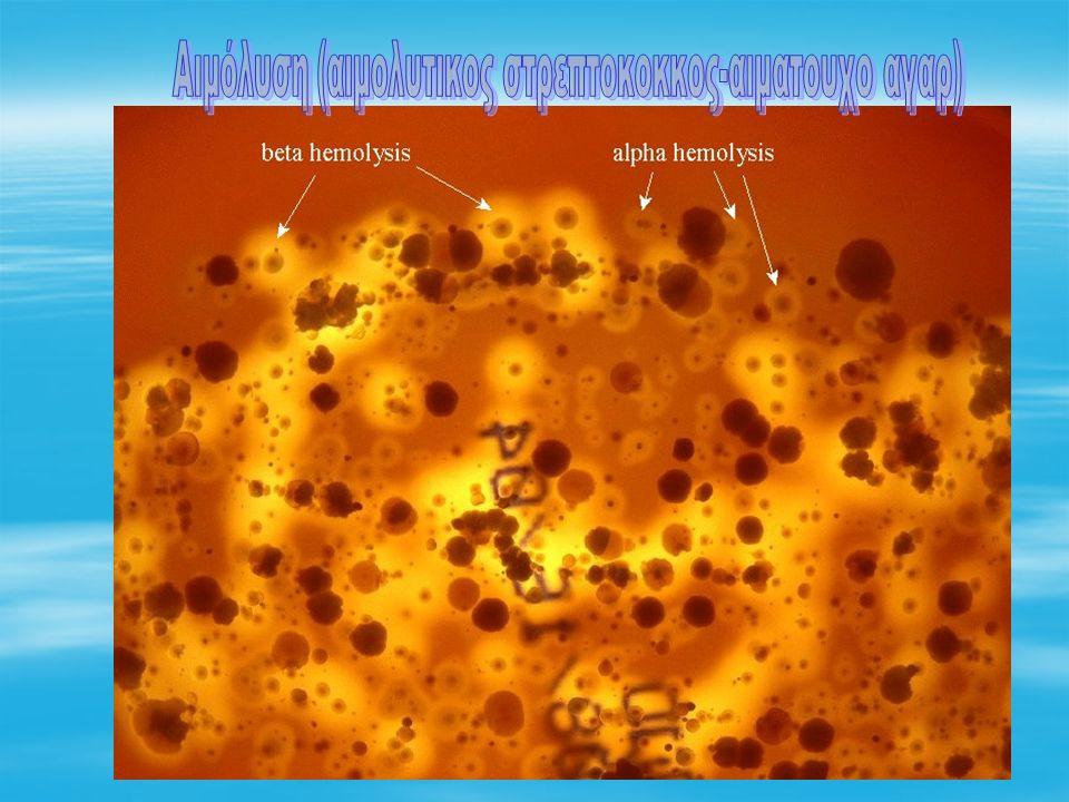 Αιμόλυση (αιμολυτικος στρεπτοκοκκος-αιματουχο αγαρ)