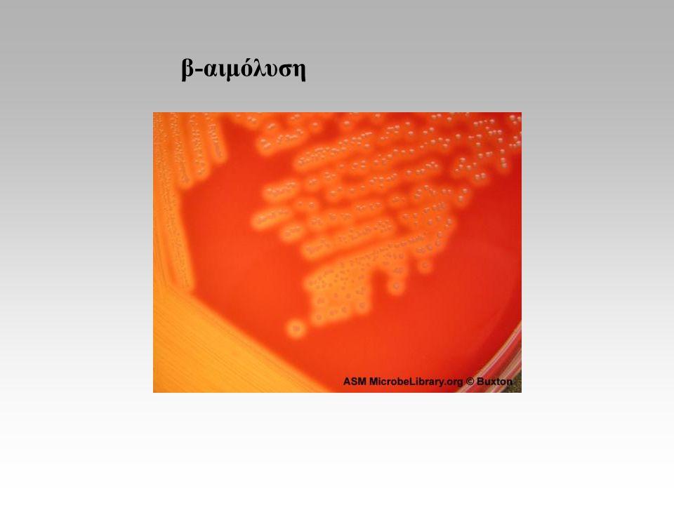 β-αιμόλυση