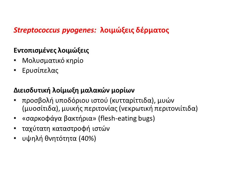 Streptococcus pyogenes: λοιμώξεις δέρματος