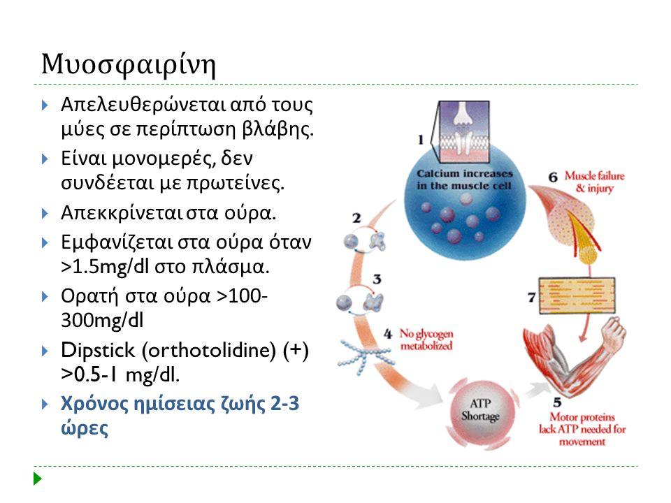 Μυοσφαιρίνη Απελευθερώνεται από τους μύες σε περίπτωση βλάβης.