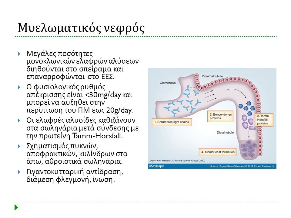 Μυελωματικός νεφρός Μεγάλες ποσότητες μονοκλωνικών ελαφρών αλύσεων διηθούνται στο σπείραμα και επαναρροφώνται στο ΕΕΣ.
