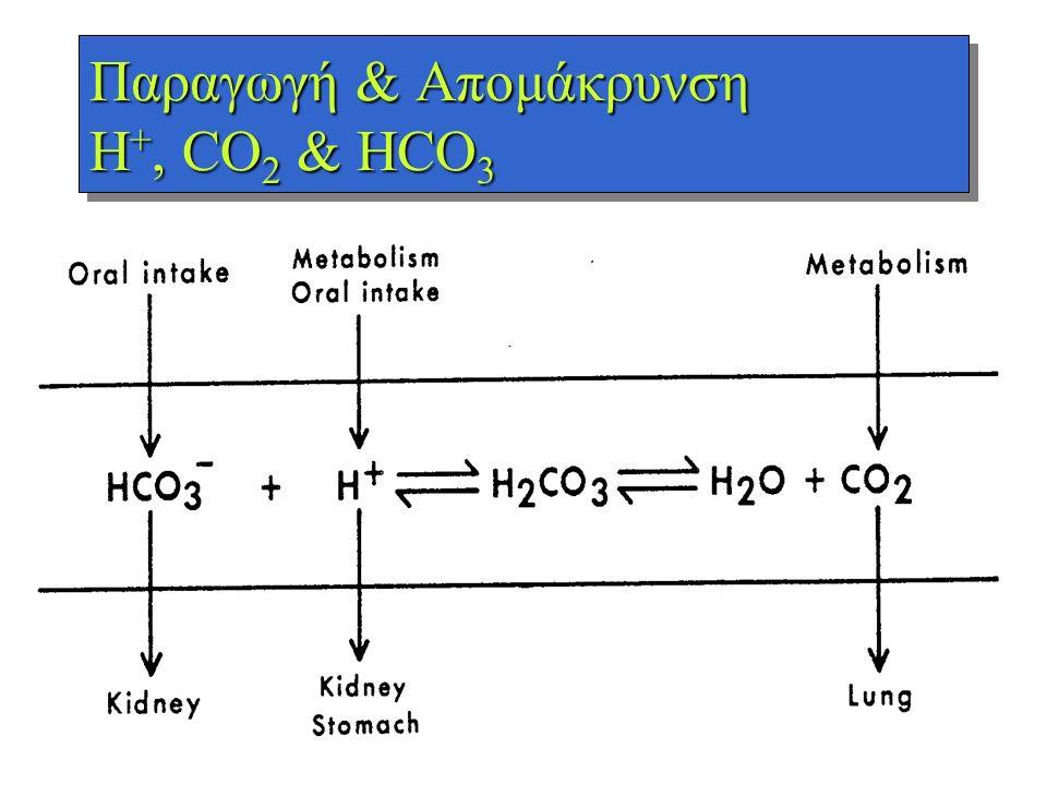 Παραγωγή & Απομάκρυνση H+, CO2 & HCO3
