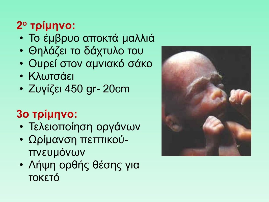 2ο τρίμηνο: Το έμβρυο αποκτά μαλλιά. Θηλάζει το δάχτυλο του. Ουρεί στον αμνιακό σάκο. Κλωτσάει. Ζυγίζει 450 gr- 20cm.