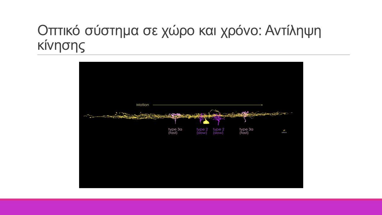 Οπτικό σύστημα σε χώρο και χρόνο: Αντίληψη κίνησης