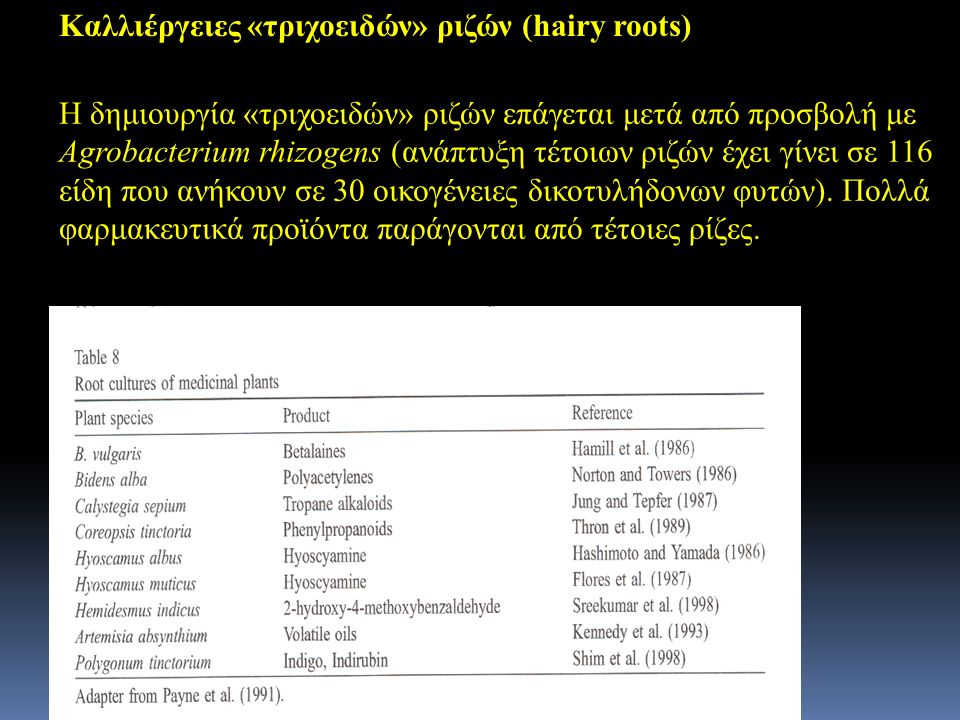 Καλλιέργειες «τριχοειδών» ριζών (hairy roots)
