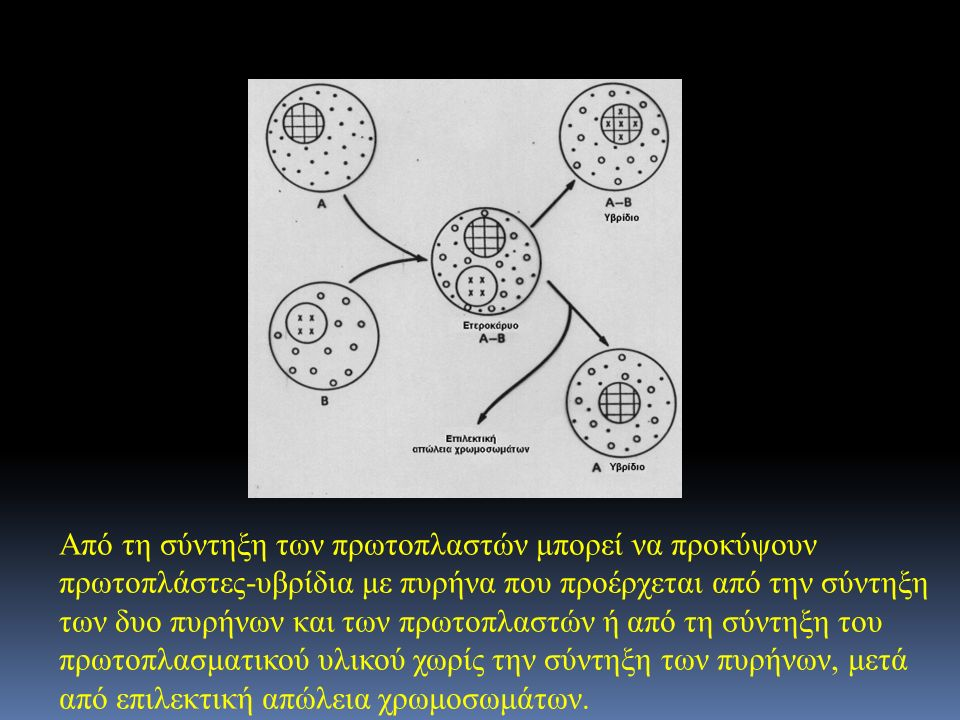 Από τη σύντηξη των πρωτοπλαστών μπορεί να προκύψουν πρωτοπλάστες-υβρίδια με πυρήνα που προέρχεται από την σύντηξη των δυο πυρήνων και των πρωτοπλαστών ή από τη σύντηξη του πρωτοπλασματικού υλικού χωρίς την σύντηξη των πυρήνων, μετά από επιλεκτική απώλεια χρωμοσωμάτων.