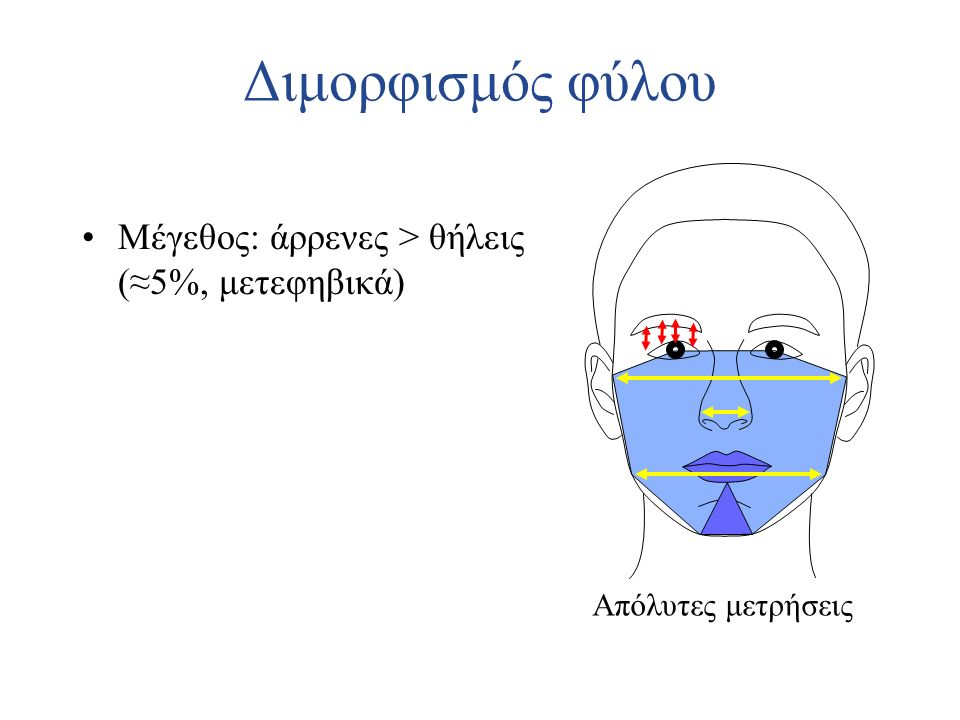 Διμορφισμός φύλου Μέγεθος: άρρενες > θήλεις (≈5%, μετεφηβικά)