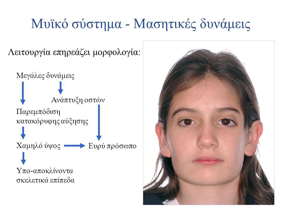 Μυϊκό σύστημα - Μασητικές δυνάμεις