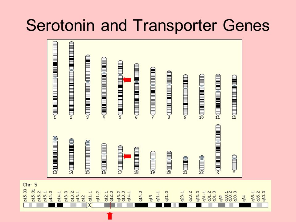Serotonin and Transporter Genes