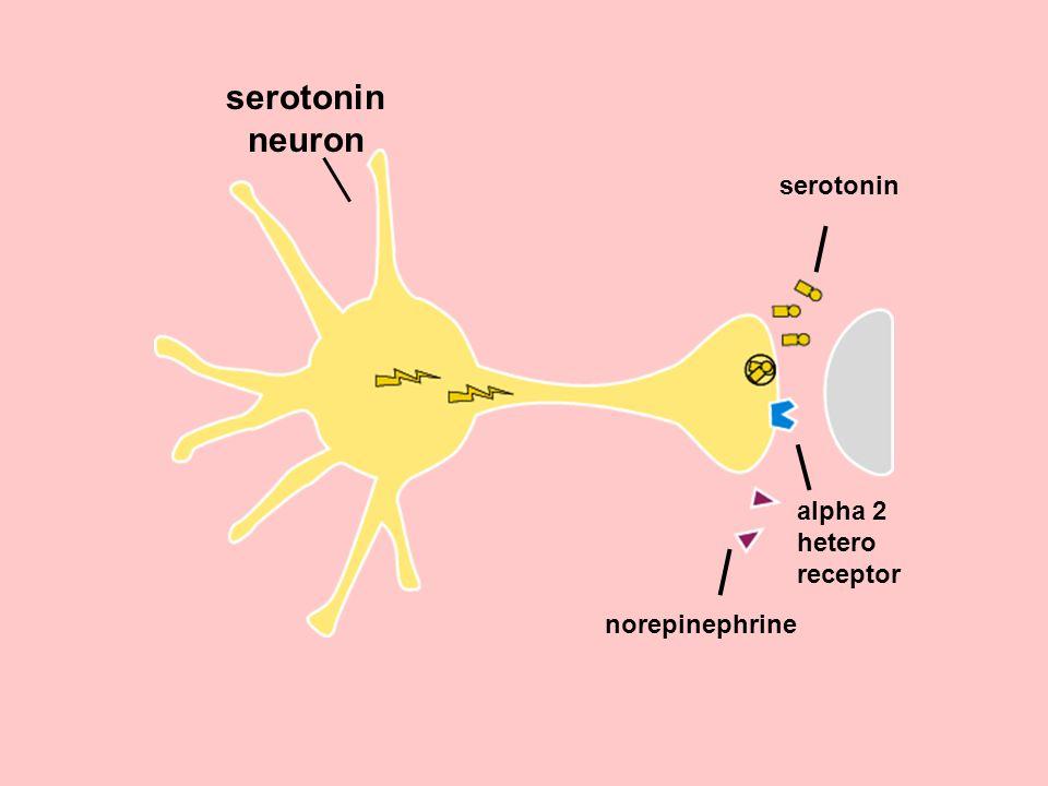 serotonin neuron serotonin alpha 2 hetero receptor norepinephrine