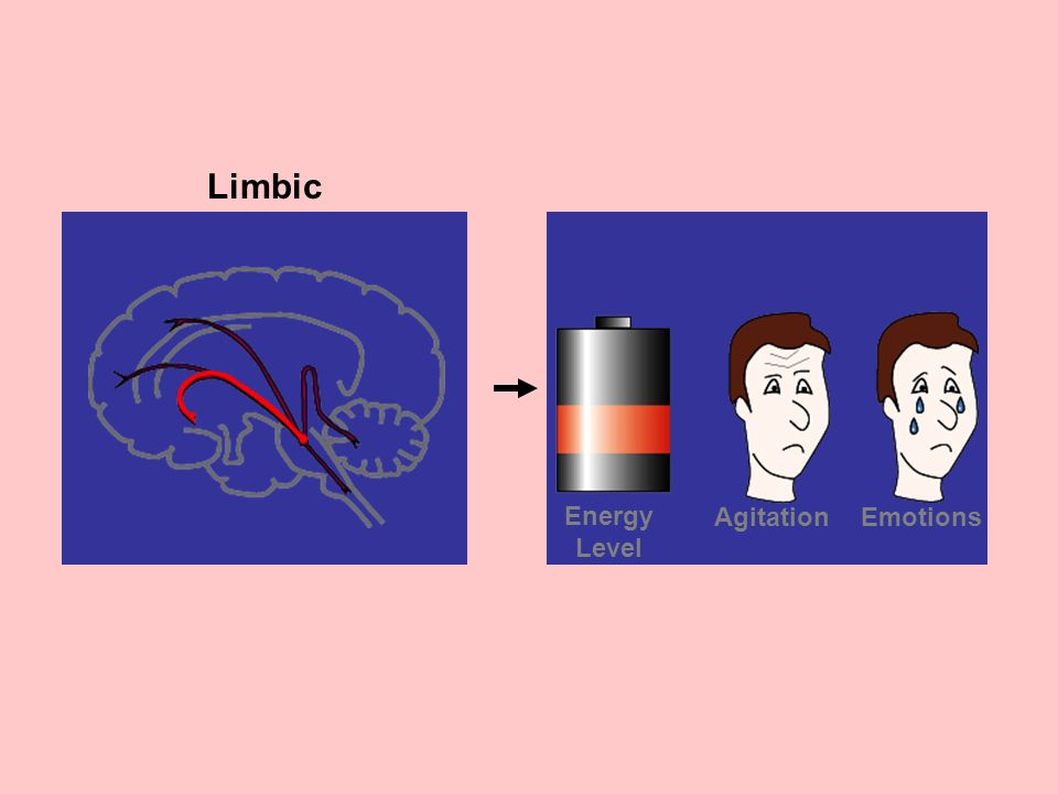 Limbic Emotions Agitation Energy Level
