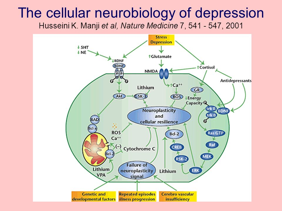 The cellular neurobiology of depression Husseini K