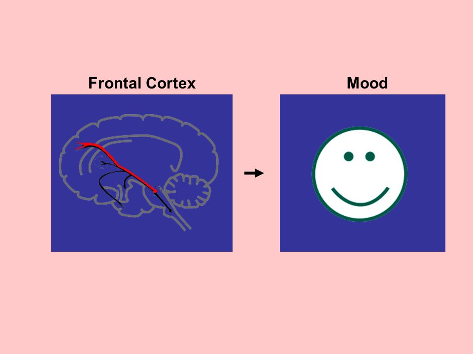 Frontal Cortex Mood