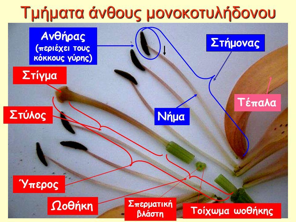 Τμήματα άνθους μονοκοτυλήδονου