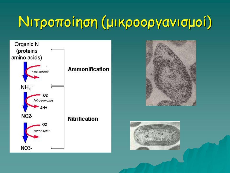 Νιτροποίηση (μικροοργανισμοί)
