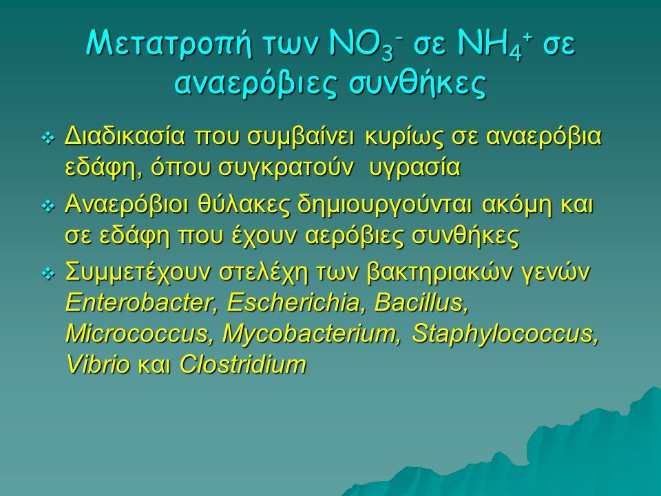Μετατροπή των NO3- σε ΝΗ4+ σε αναερόβιες συνθήκες
