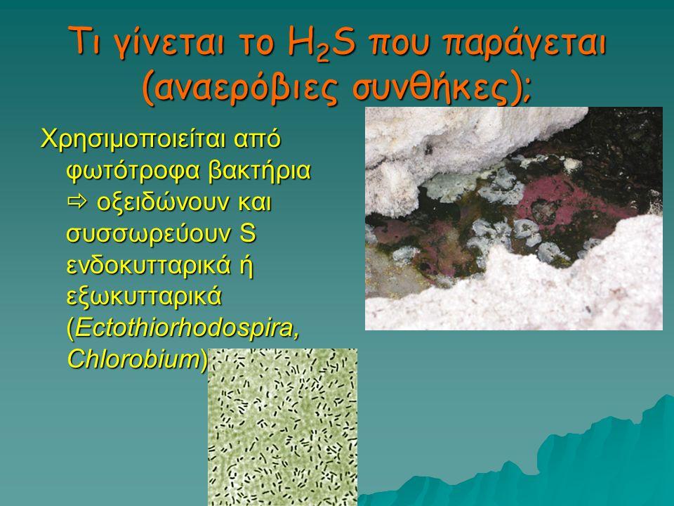 Τι γίνεται το H2S που παράγεται (αναερόβιες συνθήκες);