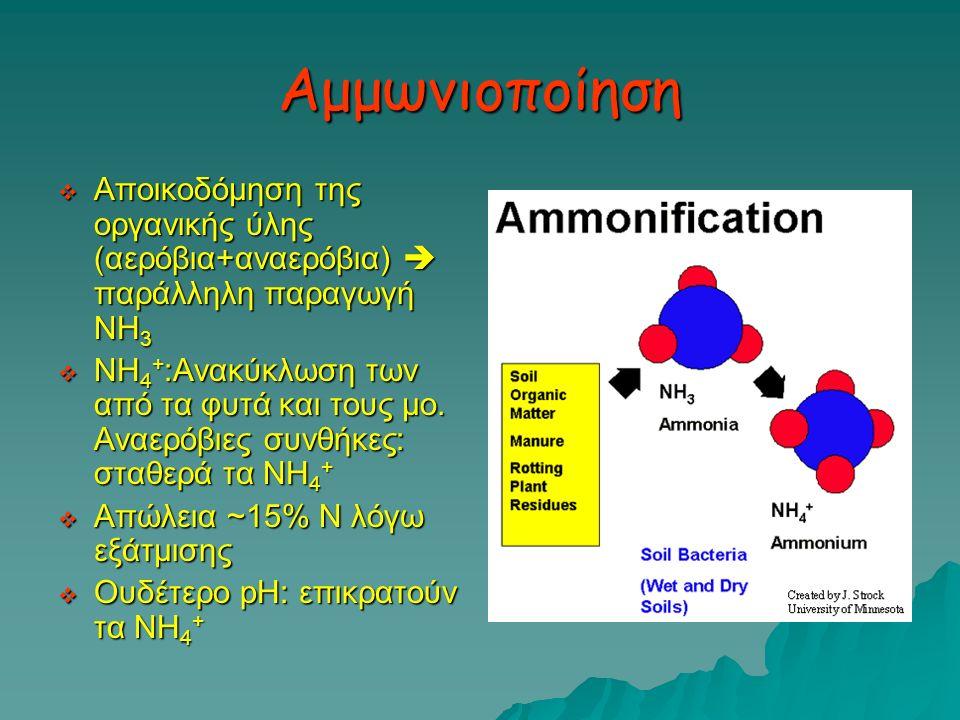 Αμμωνιοποίηση Αποικοδόμηση της οργανικής ύλης (αερόβια+αναερόβια)  παράλληλη παραγωγή ΝΗ3.