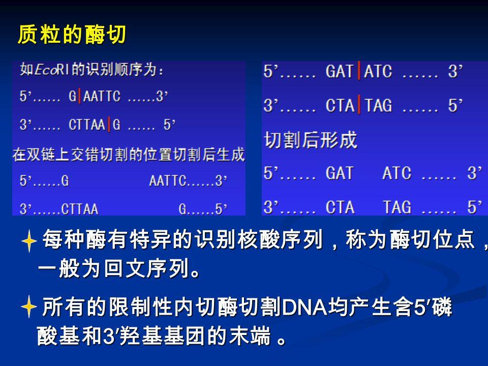 质粒的酶切 每种酶有特异的识别核酸序列,称为酶切位点,一般为回文序列。 所有的限制性内切酶切割DNA均产生含5′磷 酸基和3′羟基基团的末端 。