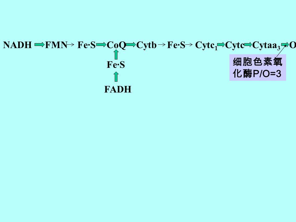 NADH FMN Fe·S CoQ Cytb Fe·S Cytc1 Cytc Cytaa3 O2 细胞色素氧化酶P/O=3 Fe·S FADH