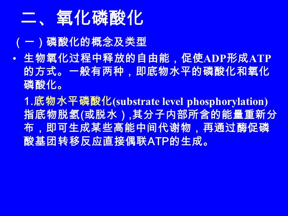 二、氧化磷酸化 (一)磷酸化的概念及类型. 生物氧化过程中释放的自由能,促使ADP形成ATP的方式。一般有两种,即底物水平的磷酸化和氧化磷酸化。