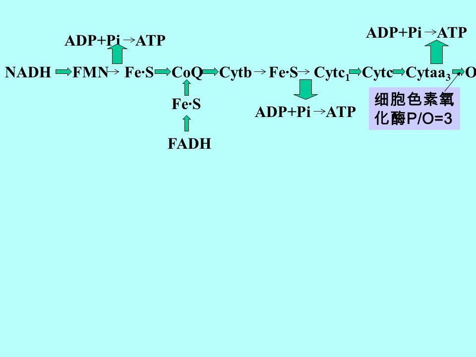 ADP+Pi ATP ADP+Pi ATP. NADH. FMN Fe·S. CoQ. Cytb Fe·S Cytc1. Cytc. Cytaa3. O2.