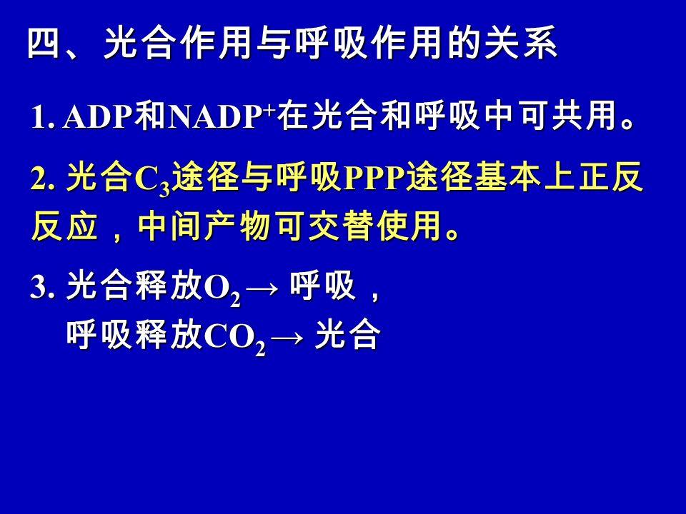 四、光合作用与呼吸作用的关系 1. ADP和NADP+在光合和呼吸中可共用。