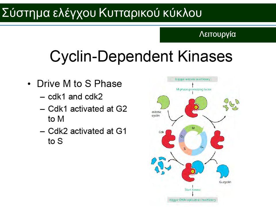 Σύστημα ελέγχου Κυτταρικού κύκλου