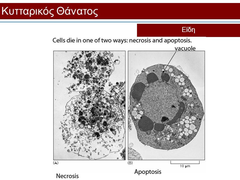 Κυτταρικός Θάνατος Είδη