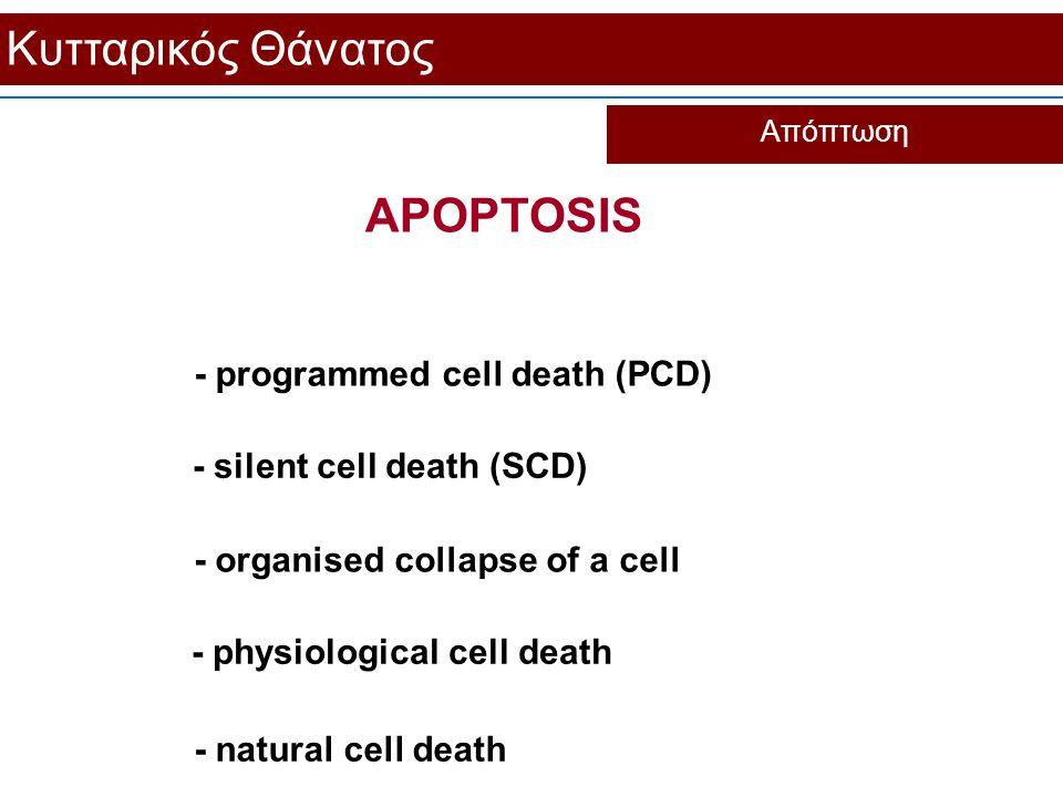Κυτταρικός Θάνατος APOPTOSIS - programmed cell death (PCD)