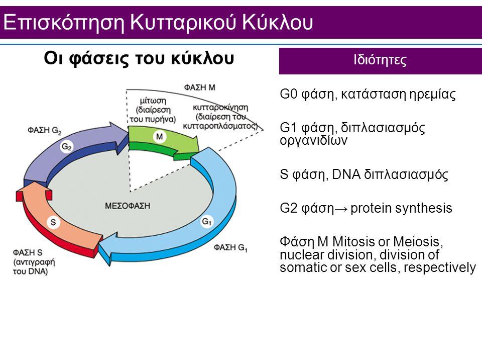 Επισκόπηση Κυτταρικού Κύκλου