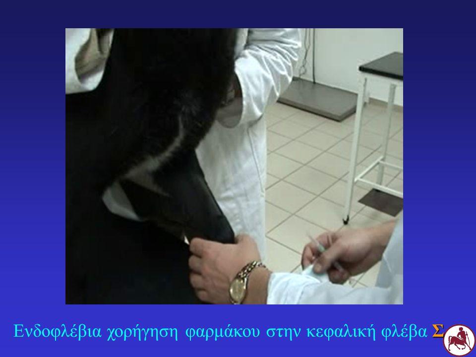 Ενδοφλέβια χορήγηση φαρμάκου στην κεφαλική φλέβα Σ