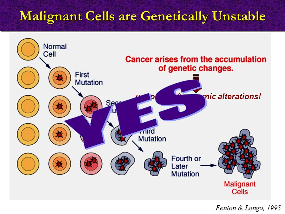 Malignant Cells are Genetically Unstable