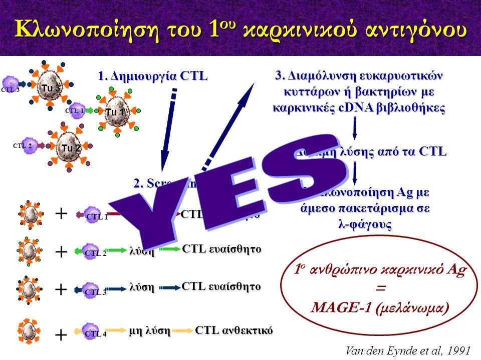 Κλωνοποίηση του 1ου καρκινικού αντιγόνου
