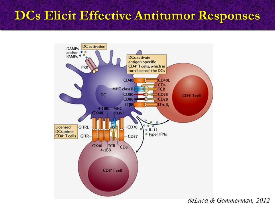 DCs Elicit Effective Antitumor Responses