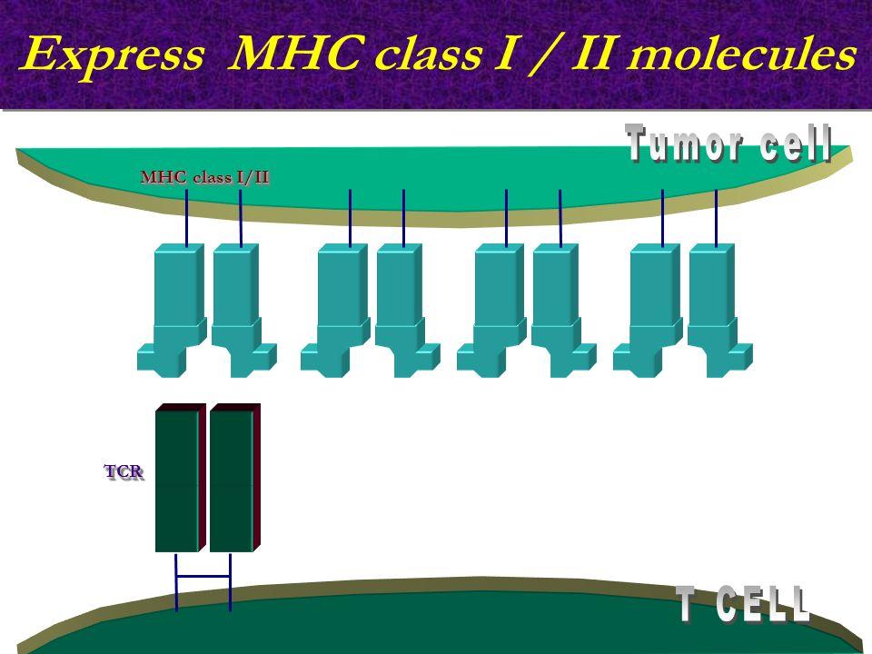Express MHC class I / II molecules