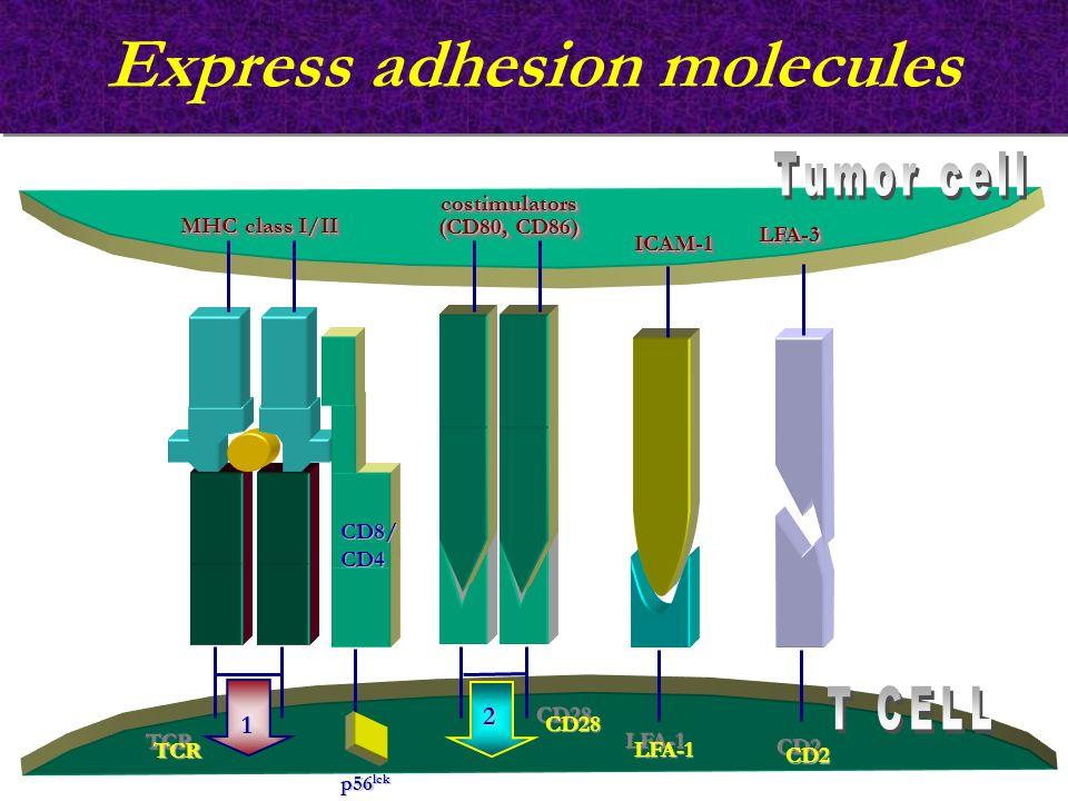 Express adhesion molecules