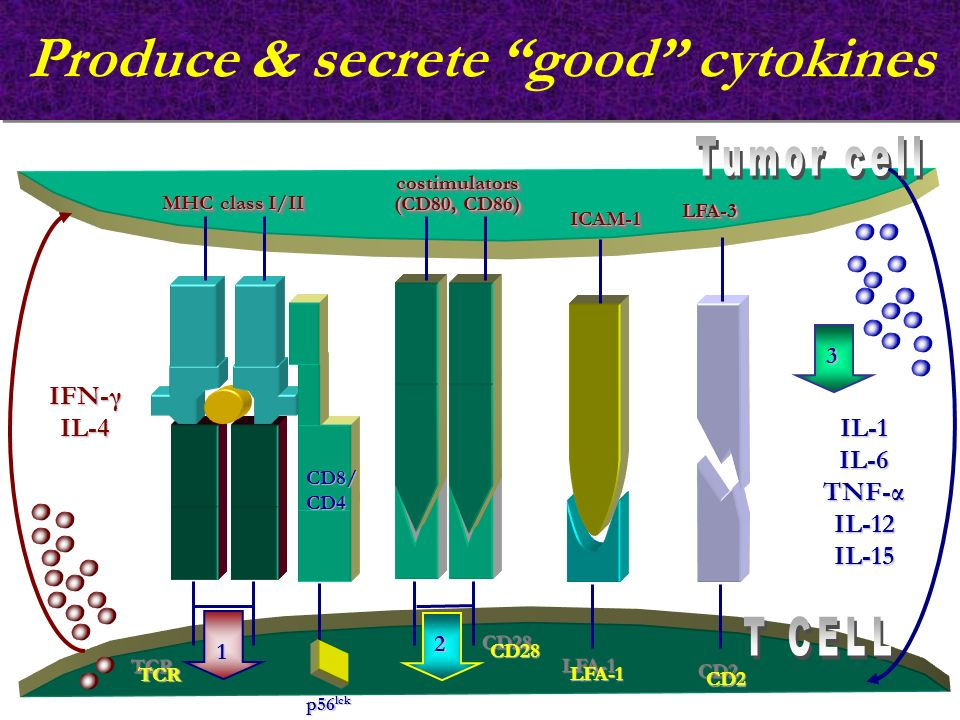 Produce & secrete good cytokines