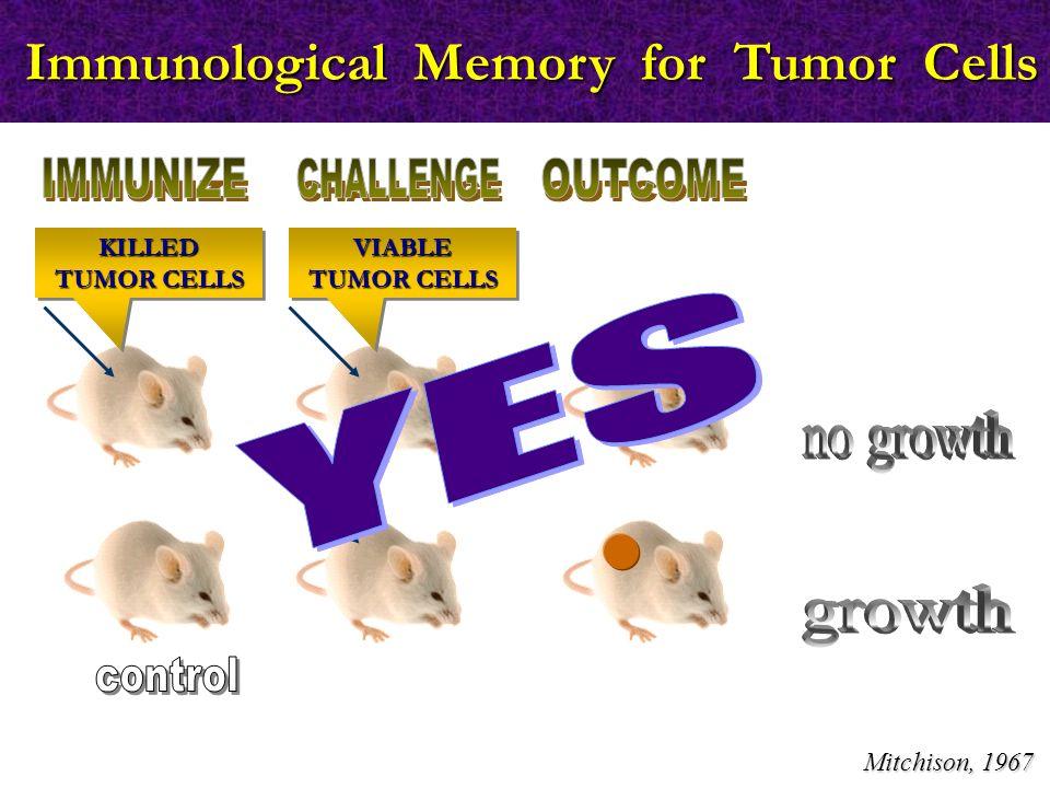 Immunological Memory for Tumor Cells