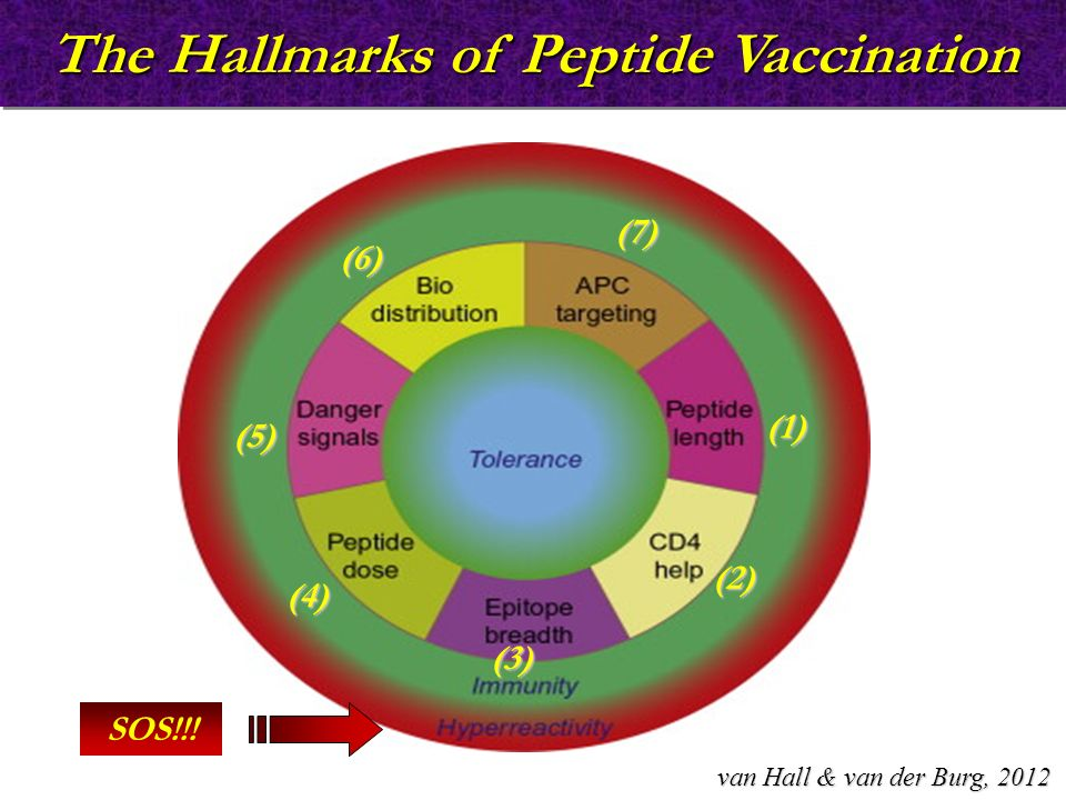The Hallmarks of Peptide Vaccination