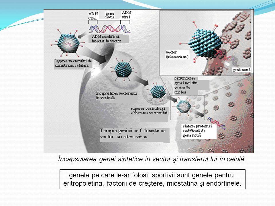 Încapsularea genei sintetice in vector şi transferul lui în celulă.
