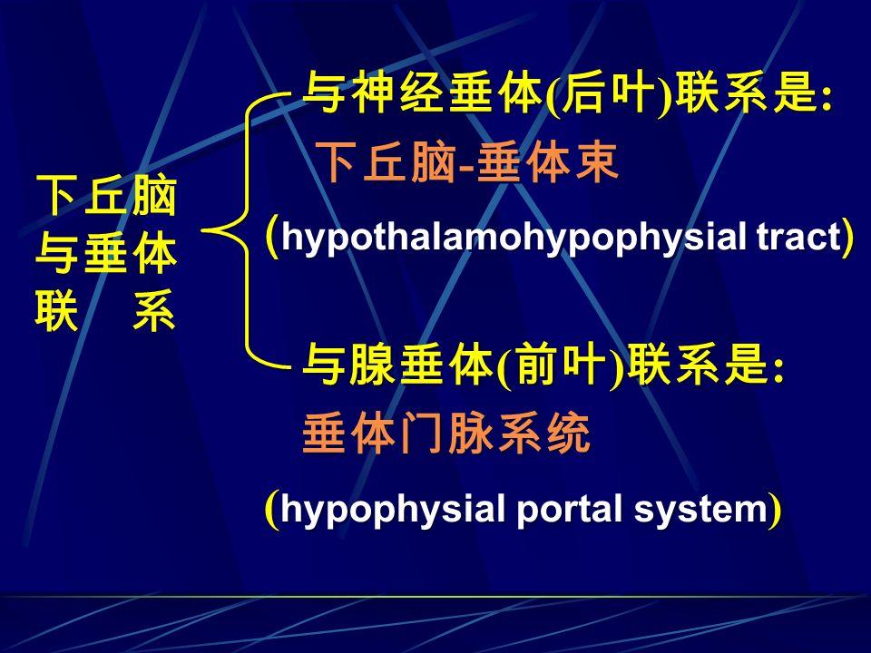 与神经垂体(后叶)联系是: 下丘脑-垂体束. (hypothalamohypophysial tract) 与腺垂体(前叶)联系是: 垂体门脉系统. (hypophysial portal system)