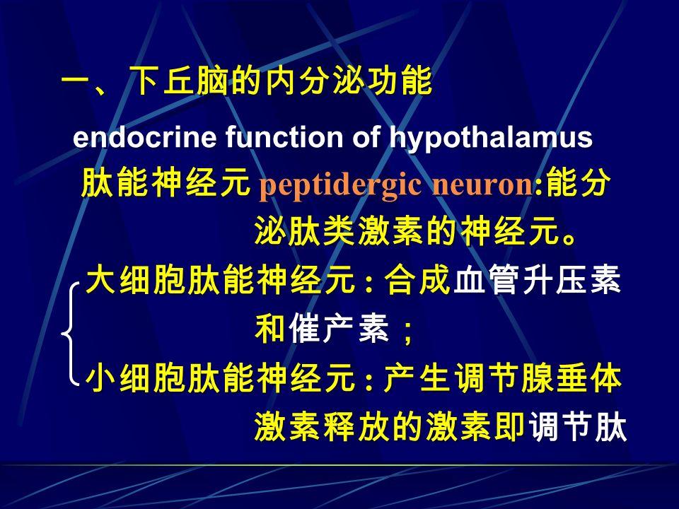 一、下丘脑的内分泌功能 泌肽类激素的神经元。 大细胞肽能神经元 : 合成血管升压素 和催产素; 小细胞肽能神经元 : 产生调节腺垂体