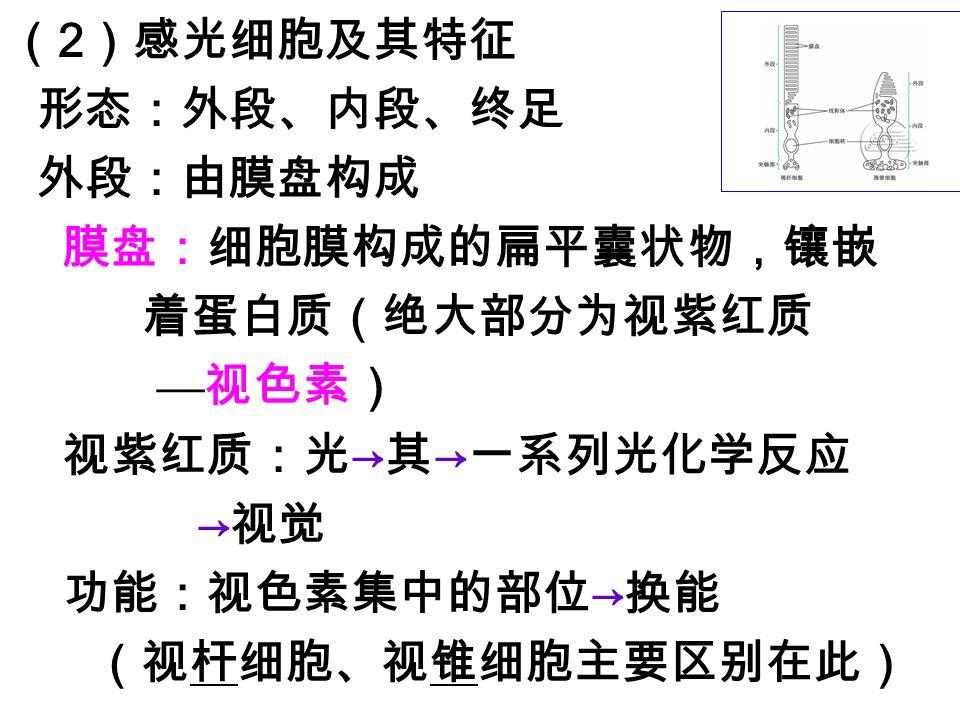 (2)感光细胞及其特征 形态:外段、内段、终足 外段:由膜盘构成 膜盘:细胞膜构成的扁平囊状物,镶嵌 着蛋白质(绝大部分为视紫红质
